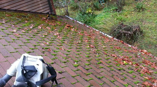 Roof Moss in Eugene before removal and cleaning